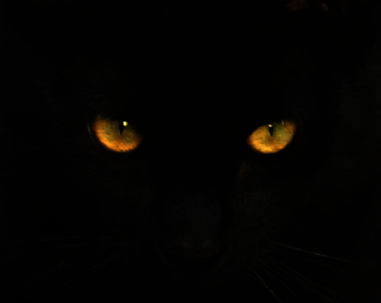 black cat eyes illuminating in darkness